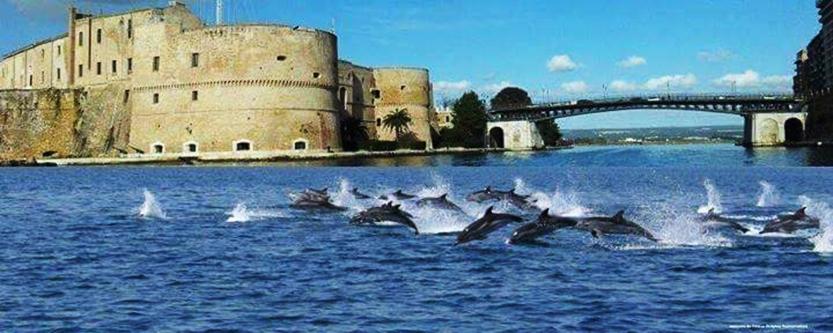 delfini-di-taras